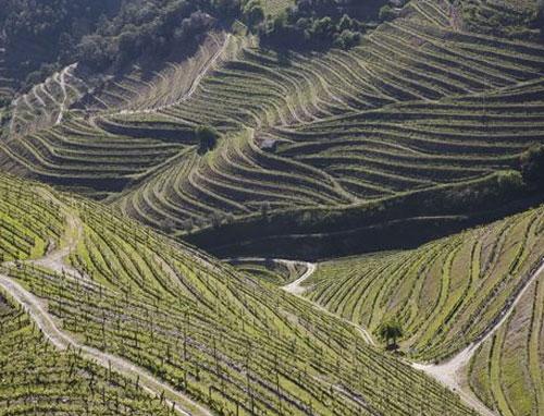 PHM-vignoble_Douro-1.jpg