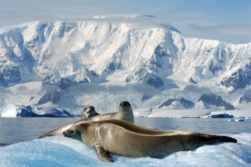 PatagoniaAntartica4_-_Turismo_Chile.jpg
